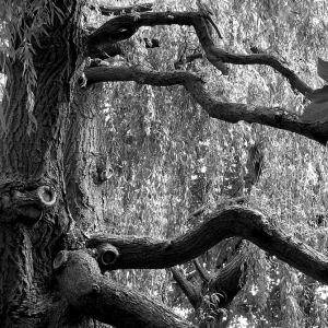 Gnarly Tree II